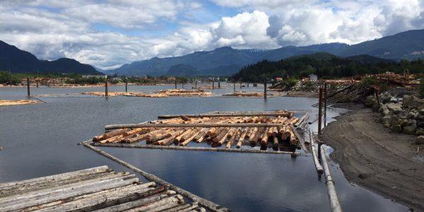 Custom-Cut Logs – Douglas Fir